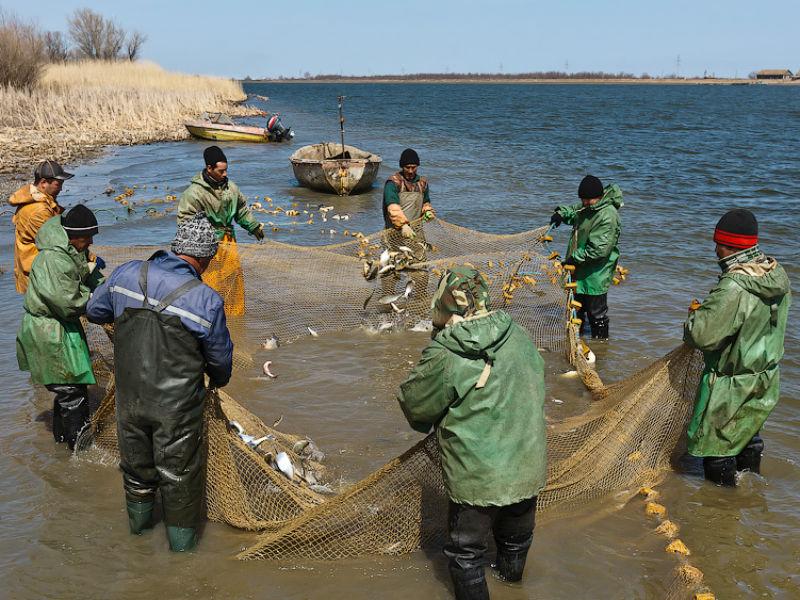 Астраханские рыбаки ссетью